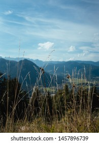 Beautiful view of the mountains and sky through grass during sunny morning, the Bavarian Alps