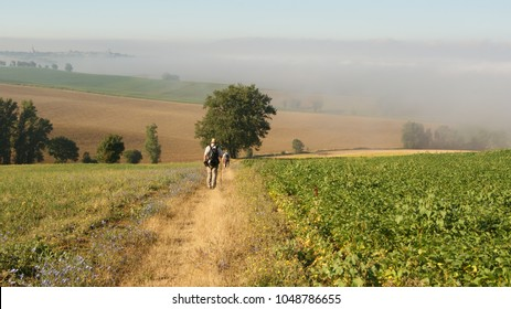 Beautiful view of a natural field with a central track going to a tree and people and pilgrims walking the Camino de Santiago