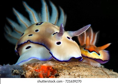 Beautiful view of nudibranch in night dive.