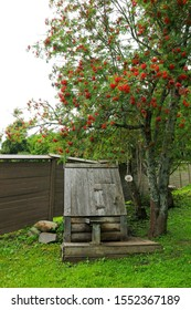 Beautiful view of old wooden well under a spreading rowan (mountain ash) with red berries
