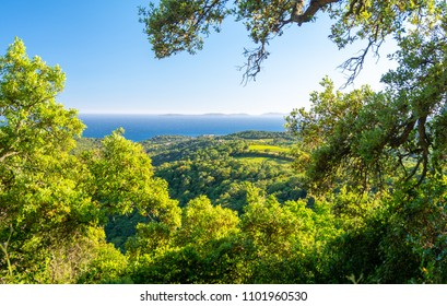 beautiful view on blue sea and green field near Ramatuelle, French Riviera, France