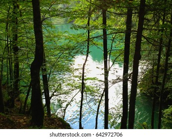 Beautiful view on a hidden lake in a forest of the Swiss Alps, Switzerland