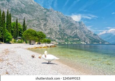beautiful view on lake Garda with swan in Limone sul Garda, Italy
