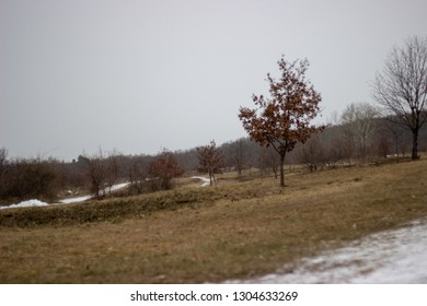 beautiful view on trees with brown leaves on the grassfield with snow path and forest in background