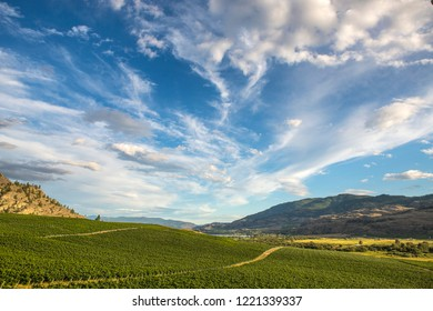 Beautiful view over vineyards in summer near Osoyoos, Okanagan, British Columbia, Canada, beautiful mountains on the background and dramatic sky.