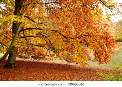 Beautiful view of park with colorful leaves on bright sunny autumn day