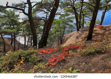 Beautiful view of the pines and plants growing on the slope by the sea