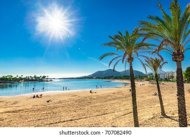 Beautiful view of Platja d'Alcudia with palm trees, sand beach Majorca, Spain Mediterranean Sea, Balearic Islands.
