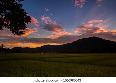 beautiful View of Rice fields