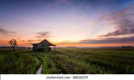 Beautiful view of rice paddy field during sunrise in Batu Pahat Johor Malaysia. Nature composition