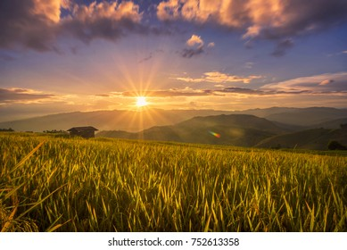 Beautiful view of rice paddy field during sunset in Chiang Mai,Thailand. Nature composition