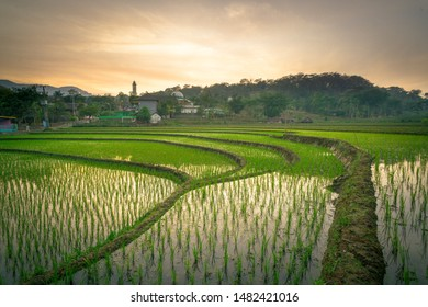 Beautiful view of ricefields in the countryside
