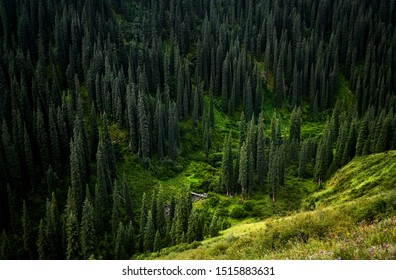 Beautiful view of river in the mountain juicy forest near Kolsai at twighlight in Kazakhstan