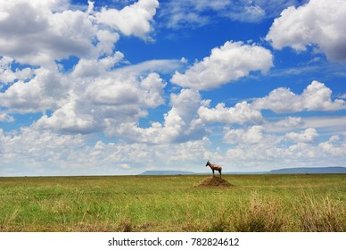 Beautiful view of the savanna with antelope topi standing on termite mound in the Serengeti National Park, Tanzania, Africa