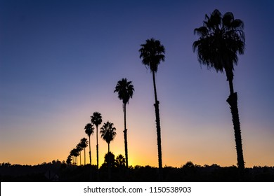 Beautiful view of a silhouetted row of palm trees at sunset.