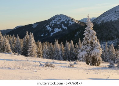 Beautiful view of snowy winter landscape with snow covered fir trees.