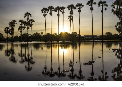 Beautiful view sugar palm trees silhouettes at sunset with reflection in rice field.