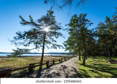 Beautiful view of the sun peaking through the trees and ocean in the background on a summer morning at Rathtrevor Beach in Parksville, Vancouver Island, Canada