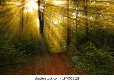 A beautiful view of sunlight rays through trees