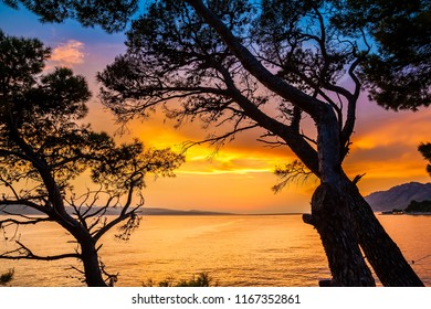 beautiful view of the sunset through pine trees, Croatia