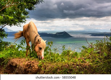 Beautiful view of Taal Lake with a horse grazing in the foreground.