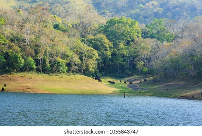 Beautiful view of thekkady lake and periyar tiger reserve forest, Thekkady, Idukki District, Kerala, India. A famous tourist place in Kerala