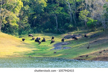 Beautiful view of thekkady lake and periyar tiger reserve forest, Thekkady, Idukki District, Kerala, India