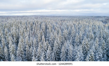 Beautiful view of trees covered by snow. Forest in winter.