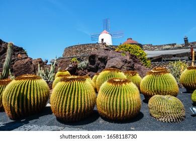 Beautiful view of tropical cactus garden (Jardin de Cactus) in Guatiza village. Lanzarote, Canary Islands, Spain.