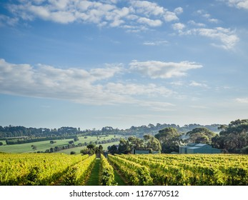 Beautiful view of the vineyards on a wine tour of the Mornington Peninsula, Australia