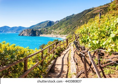 Beautiful view of the vineyards, sea and mountains. Cinque Terre, Italy. Selective focus.