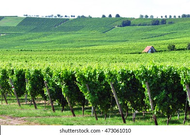 Beautiful view of the vineyards in the valley.