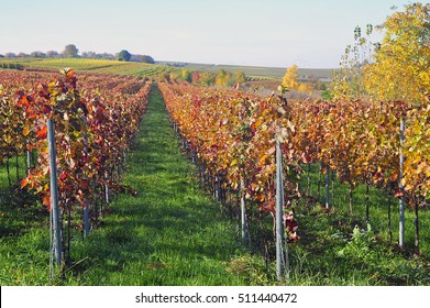 Beautiful view of the vineyards in the valley im Autumn