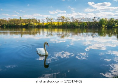 Beautiful view of white swan on the pond. Clouds reflecting on the water surface with wild animal. Velky rybnik, Malesov near Kutna Hora, the Czech Republic.