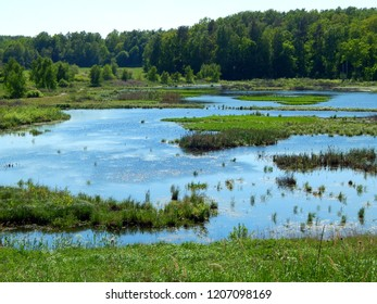 Beautiful view of wild wetlands on sunny spring day, Masuria, Poland