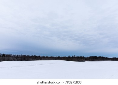 Beautiful view of winter landscape with blue sky, black forest and white ground. Puka, Estonia.