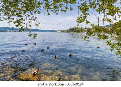 Beautiful view of Zurich Lake with ducks and trees in foreground.
