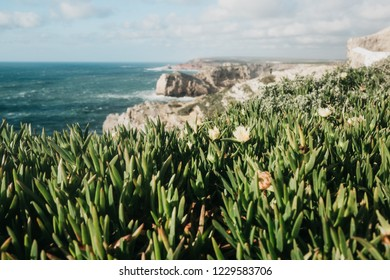 Beautiful views of the Atlantic Ocean and coastal cliffs and plants or vegetation off the coast of Portugal on a sunny day. Selective focus on vegetation.
