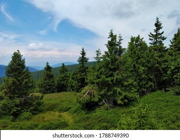 Beautiful views of lush green forests, hills, nature and landscape from hiking trail below Praded, highest peak of Jeseniky Mountains, mountain range in Czech Republic and popular tourist area.  - Shutterstock ID 1788749390