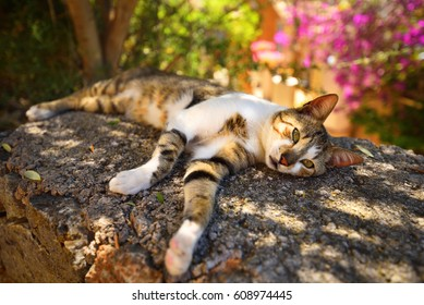 Beautiful village cat resting in the shadow on a hot summer day