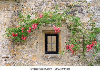 Beautiful vine of pink rose above window on old classic brown stone wall at bibury cottage village, UK England.