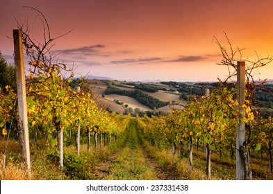 A beautiful vineyard across the hills of San Terenziano, Umbria, central Italy
