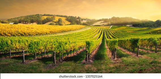 Beautiful Vineyard in the Adelaide Hills, South Australia