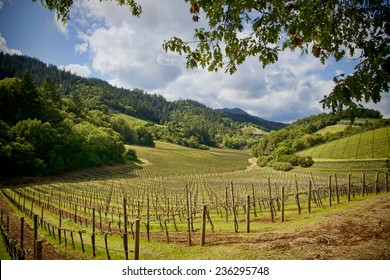Beautiful vineyard land located in the Napa Valley, California