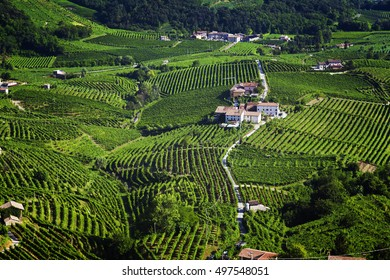 Beautiful Vineyard landscape with green and yellow sunny leaves in Valdobiaddene, Italy.
