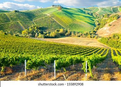 Beautiful vineyard on hills