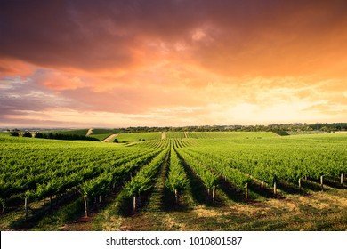 Beautiful Vineyard in South Australia