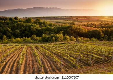 Beautiful vineyard sunset near Melnik, Bulgaria