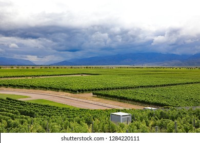 Beautiful vineyard in the Uco Valley of Argentina, south of Mendoza, near the Andes mountains.