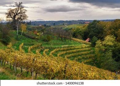 Beautiful vineyards landscape of Jeruzalem on Slovene Hills in Ljutomer. Northeastern Slovenia